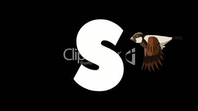 Letter S and Sparrow on foreground