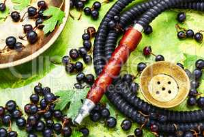 Arabia shisha with black currant