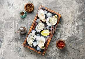 Opened oysters on cutting board