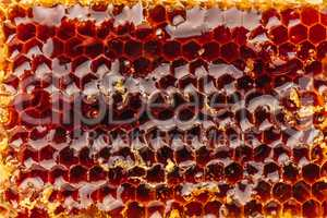 Macro of honeycomb background