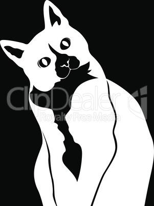 Black stencil of cute cat