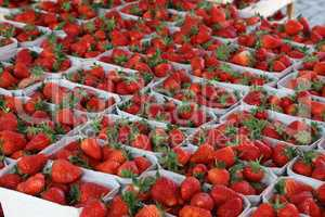 Fresh strawberries are on sale at the Bazaar