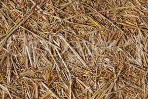 Yellow dry straw background texture. The Straw texture