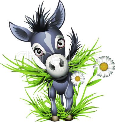 Little shaggy grey donkey