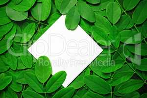 Paper with green leaves