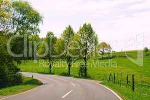 Road curve with trees