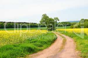 Rape field and path