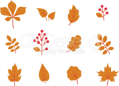 Autumn leaves set. Fall leaf and berries nature icons overwhite background.