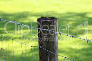 Fence post with barbed wire fencing on a green background