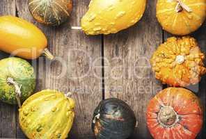 Assortment of autumn pumpkins