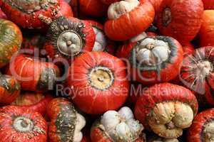 Fresh healthy bio pumpkins on farmer agricultural market at autumn