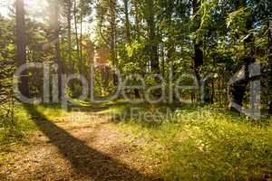 forest in Poland, small path with light and shadow