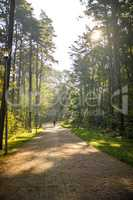 sun rays in a forest, way with walking man