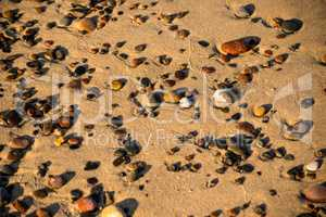 pebbles stones on a sandy beach with feather