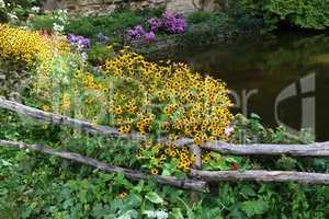 Yellow flowers grow near a small pond
