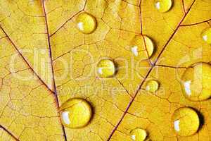 Yellow leaf, water drops