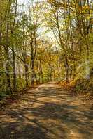 Forest in autumn with calvary way in light and shadow