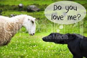 Dog Meets Sheep, Text Do You Love Me
