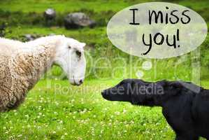 Dog Meets Sheep, Text I Miss You