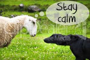 Dog Meets Sheep, Text Stay Calm