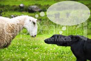 Dog Meets Sheep, Copy Space For Advertisement
