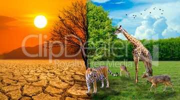 The screen separates the drought and the complete forest where the wildlife is living. Global warming concept