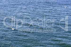 Background of ripples on water surface