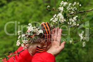 Victory Day. Arrangement of George ribbon and flowering branch