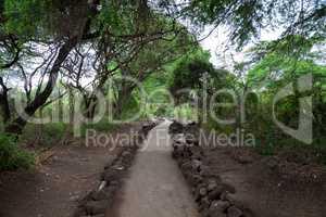 Path in Mzima Springs, scenery of a oasis in Kenya
