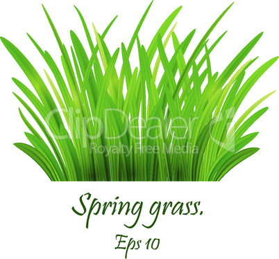 spring grass,Lawn. Green Grass Isolated on white background, tuft of grass, fresh spring grass, panoramic view Eps 10