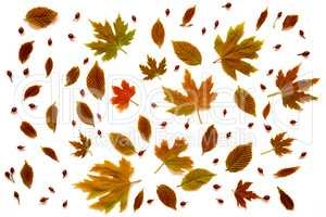 Flat Lay Of Various, Colorful Autumn Leaf Texture.