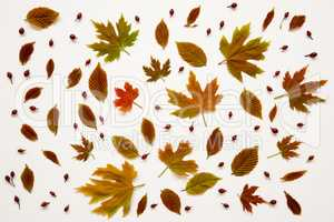 Flat Lay Of Many Various Colorful Autumn Leaf Texture.