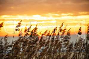 Beach Grass At Sunrise Or Sunset, Beautiful Nature Background